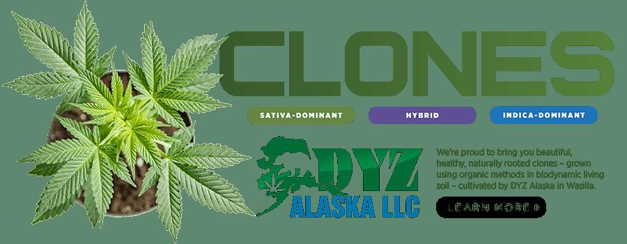 Clones from DYZ Alaska!